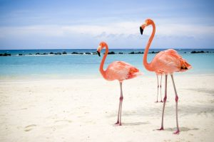 2 Flamingo Birds Wide