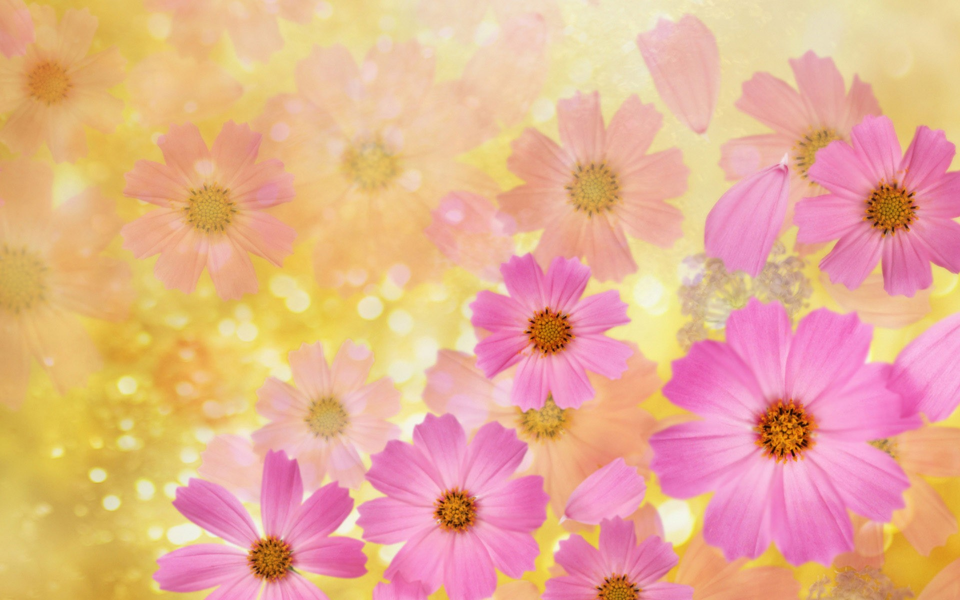 Abstract Beautiful Flowers Wide