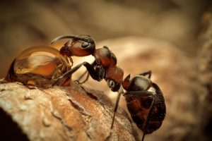 Amazing Ant Drinking Water