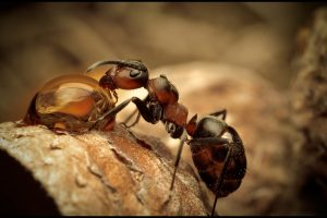 Amazing Ant Drinking Water Wide