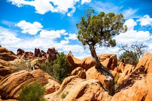Arches National Park Wide