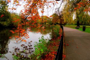 Autumn In The Park By The River-Other