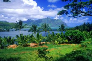 Beautiful Hawaii Fish Pond