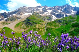 Beautiful Mountain Vegetation Wide