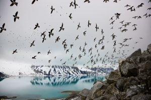 Birds Flying Above Lake Great National Geographic Landscape
