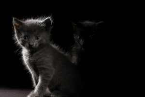 Black And Gray Cats