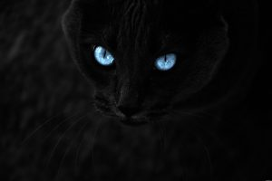 Blue Eyes In The Dark-Other