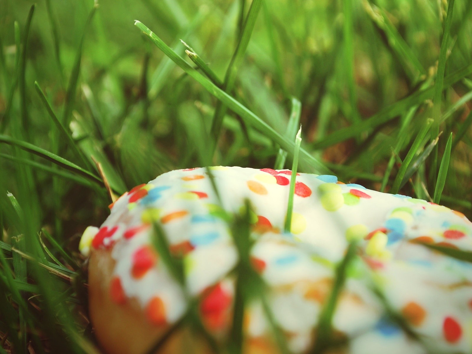 Cake In Grass