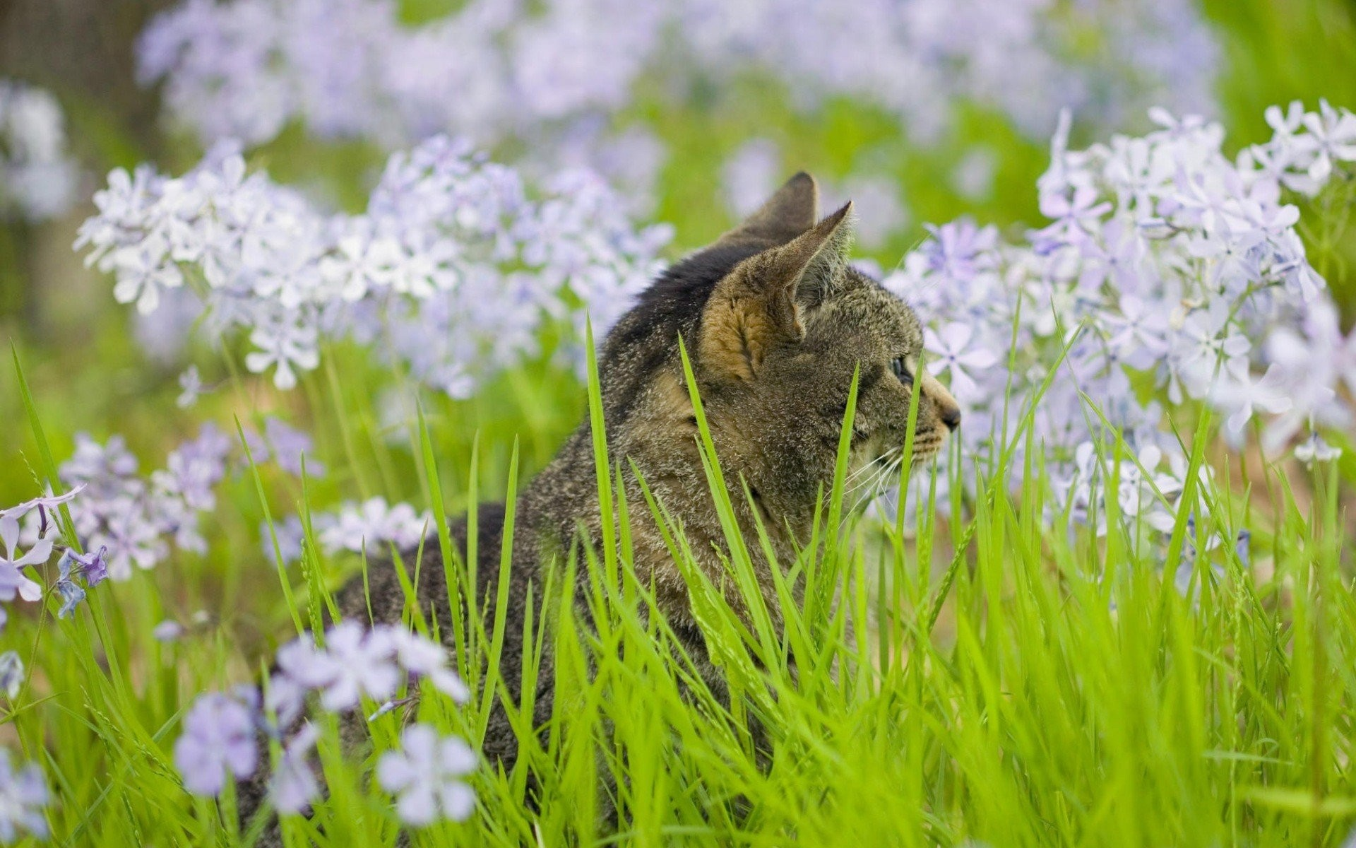 Cat Among Flowers Wide