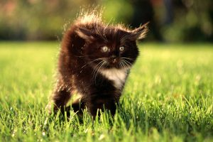 Cat On Grass Wide
