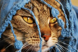 Cat With Scarf Wide