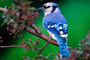 Charming And Beautiful Blue Bird