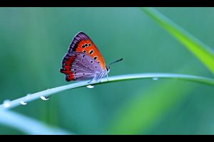 Colorful Butterfly Wide