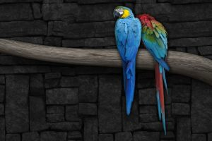 Colorful Parrot Wide