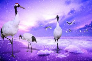 Cool Red Crowned Cranes Wide