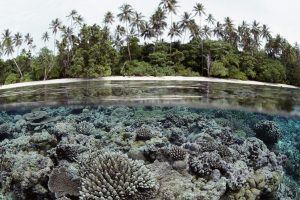 Coral Reef Solomon Islands