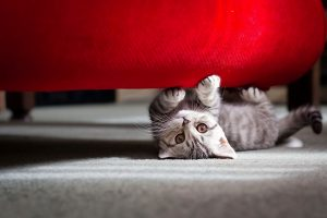Cute Cat Under Sofa Wide