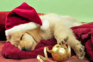 Cute Christmas Puppy Wide