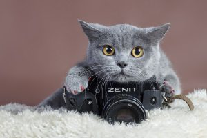 Cute Gray Cat With Camera Wide