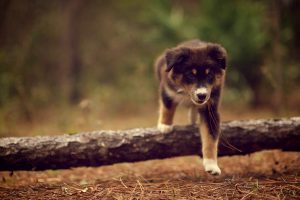 Puppy Walk In Wood