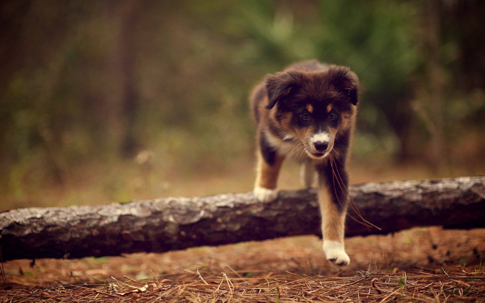 Cute Puppy In The Woods Wide