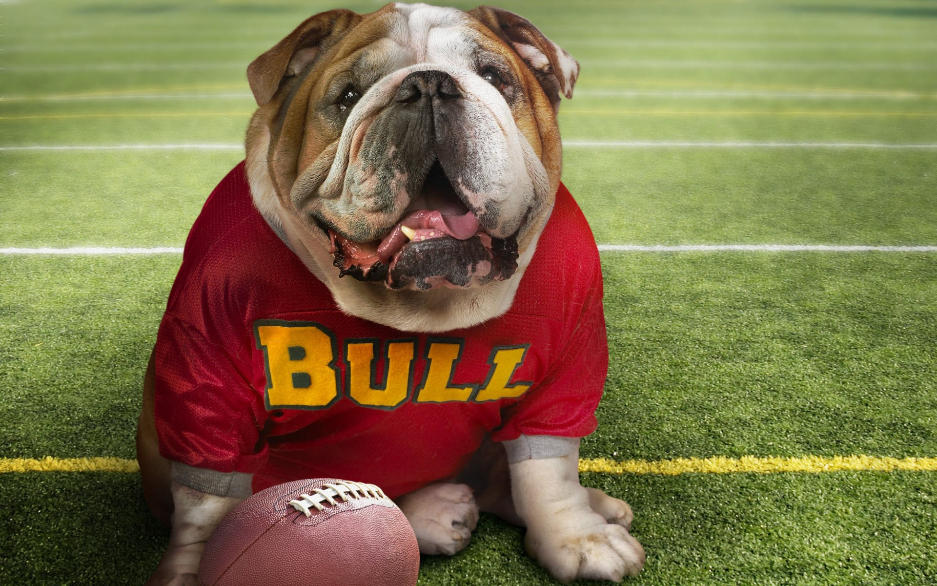 Dog On Football Field Wide
