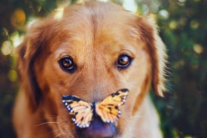 Dog With A Butterfly Nose