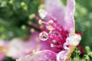 Flower Droplets Wide