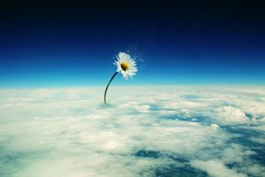 Flower On The Sky Wide