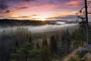 Foggy Sunrise National Park Wide