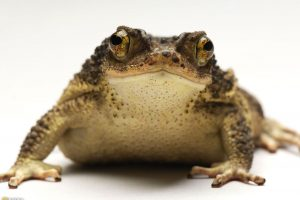 Frog Is Looking Into You