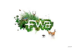 Fwa 3D Text In Nature Wide