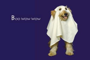 Ghoust Dog – Boo Wow Wow Wide