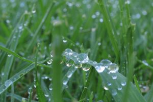 Grass With Bubbles