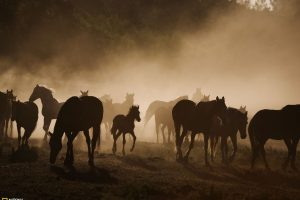 Great Horse Family Picture National Geographic