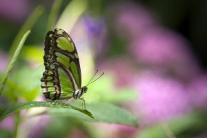 Green butterfly, Washington, D.C., USA