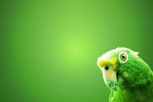 Green Curious Parrot Wide