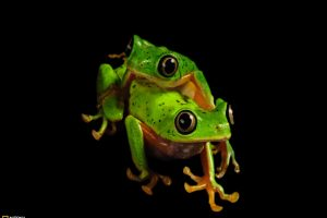 Green Frog On Green Frog
