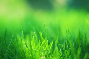 Green Grass Field Wide