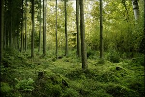 Green Wood Trees-Other