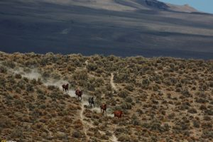 Horse Run National Geographic