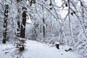 In Wood When Snow Is There Wide