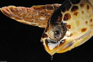 Loggerhead Sea Turtle Macro