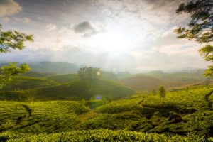 Munnar Hills Kerala India Wide