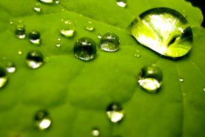 Nature Wallpapers Green Leaf With Bubbles