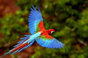 Parrot At Flight Wide