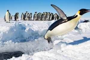 Penguins Can Fly Too