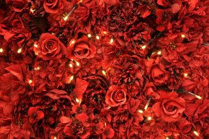 Red Roses Wide
