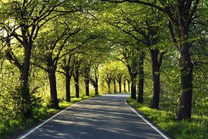 Road Crowed With Trees