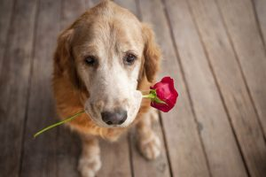 Romantic Dog Wide